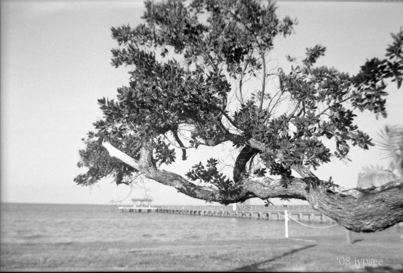 bokeelia branch