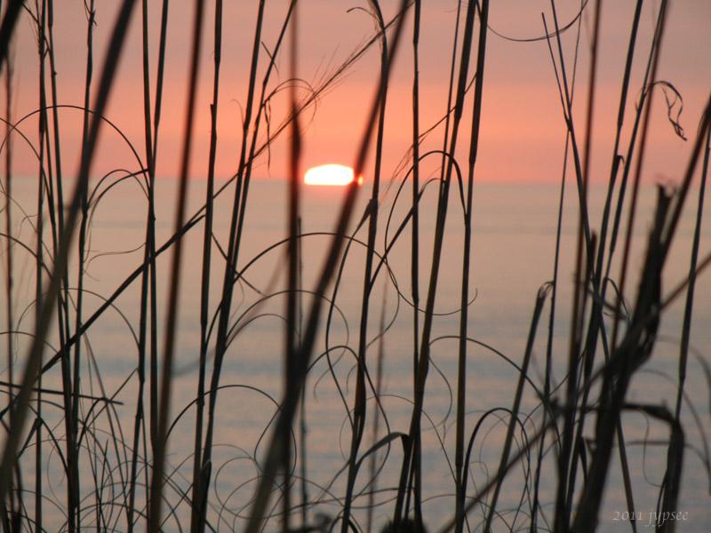 gulf grasses; no green flash