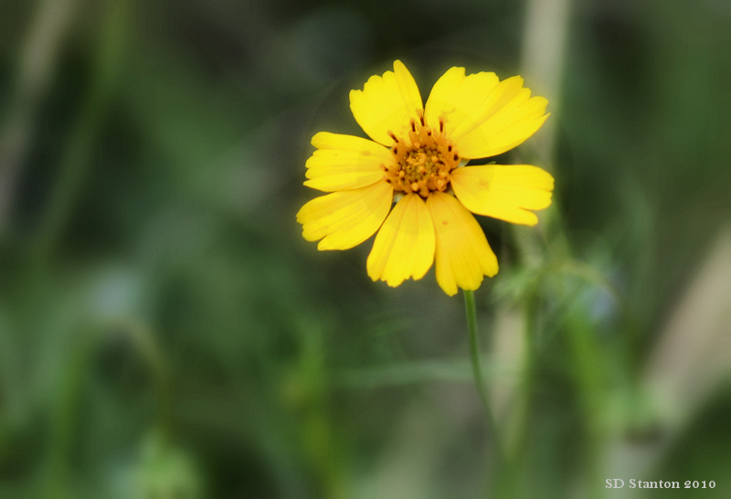 wildflower pds.jpg