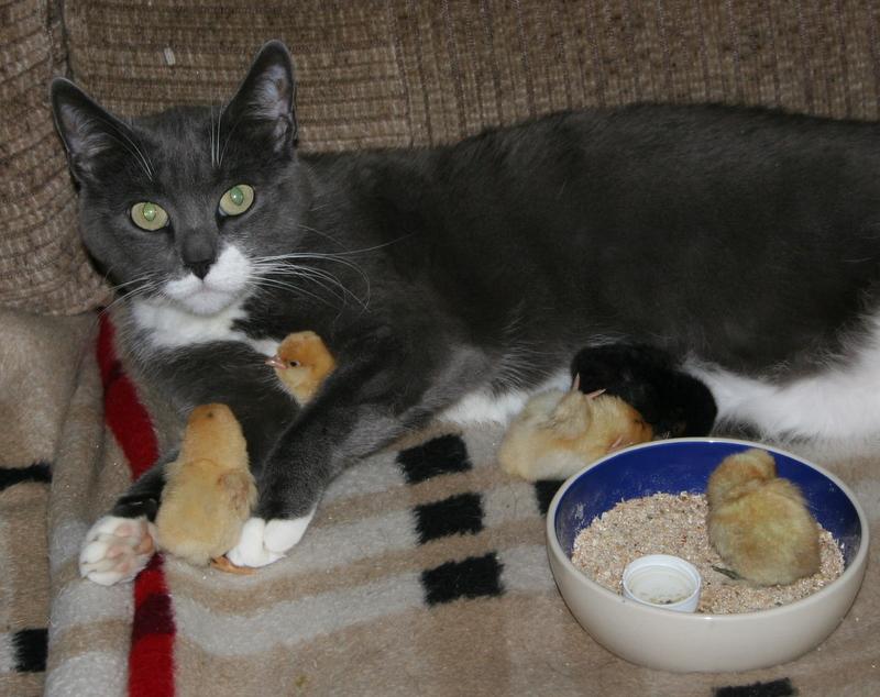 Mulle og hendes 5 kyllinger hygger sig i sofaen