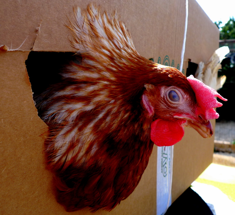 Better a chicken today ....or the egg tomorrow ....????