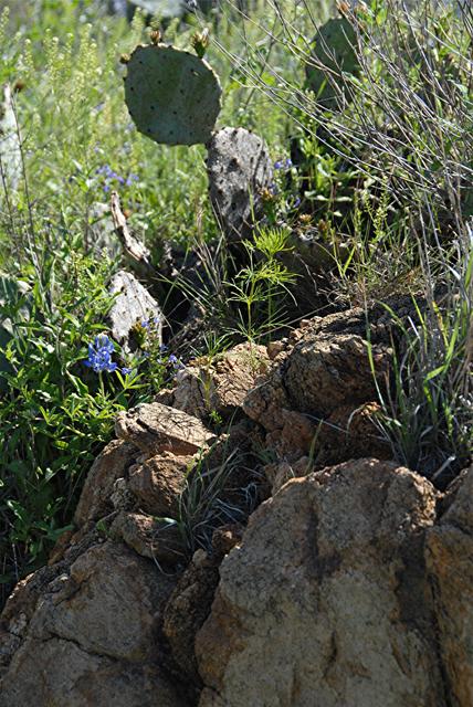4-25-2010 Mason and Llano TX 57.jpg