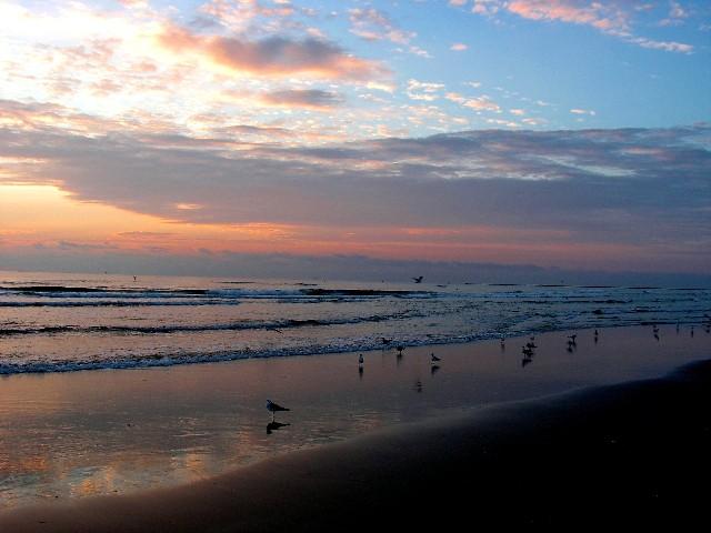 10-9-2005 Gulls at DawnZ20.JPG