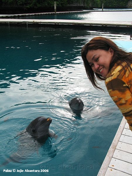Dolphins offer friendship to me