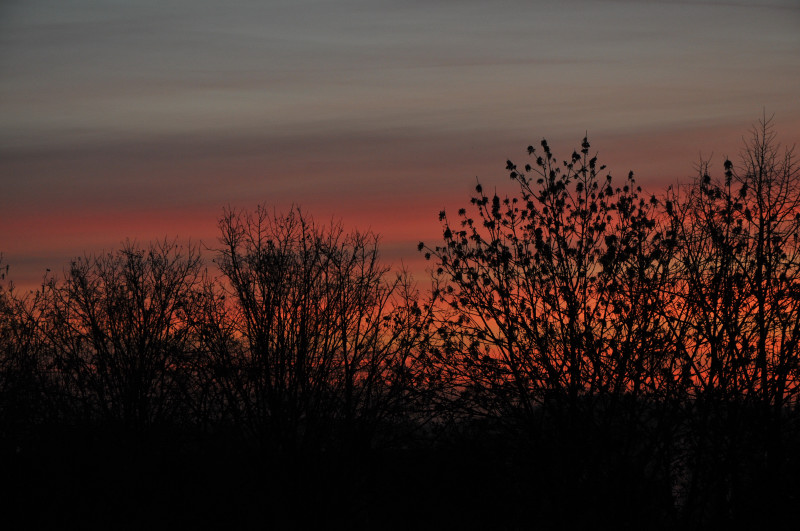From our window this morning (February 21, 2012)