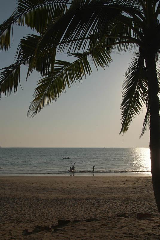 Palolem Beach and Palm Tree