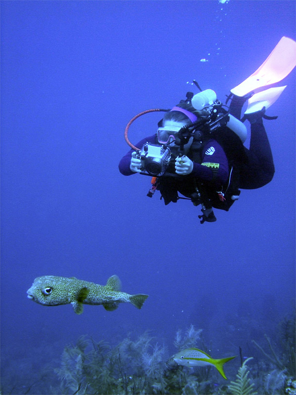 Photographing a Porcupine Fish