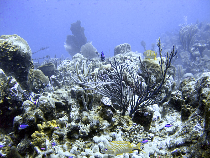 Underwater at Boneyard