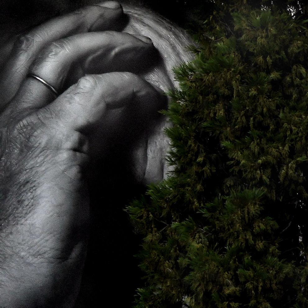the artist`s  hand