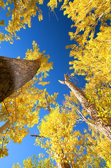 Sierras in Fall Colors