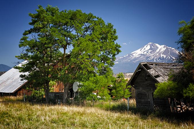 Farm & Fine Old Tree
