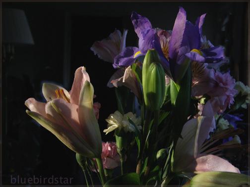 Last Light on Flora