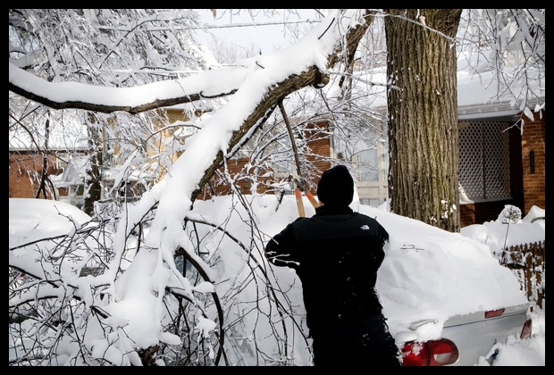 0042.This guy had to cut out branches before clearing off snow!