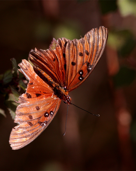 Orange Butterfly at Circle Bar B.jpg