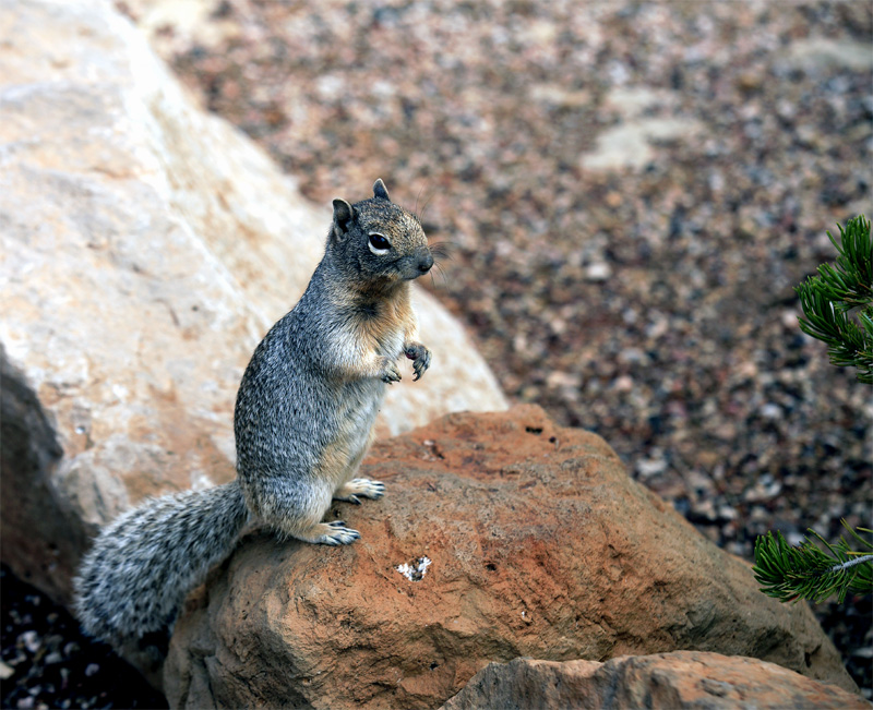 Squirrel on hind legs.jpg