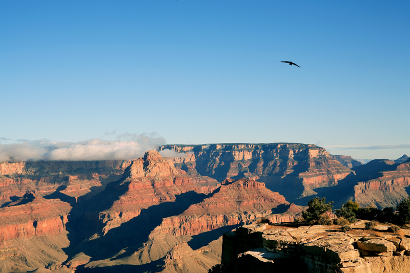 Raven over clouded canyon.jpg
