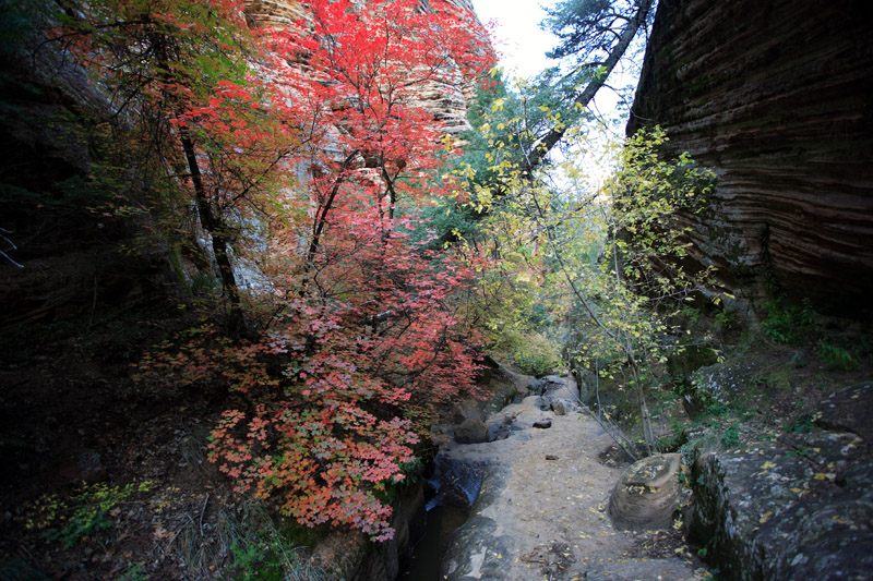 Hidden Canyon Autumn Leaves