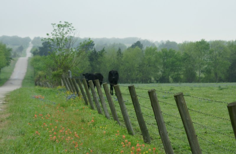 Meandering Country Lane