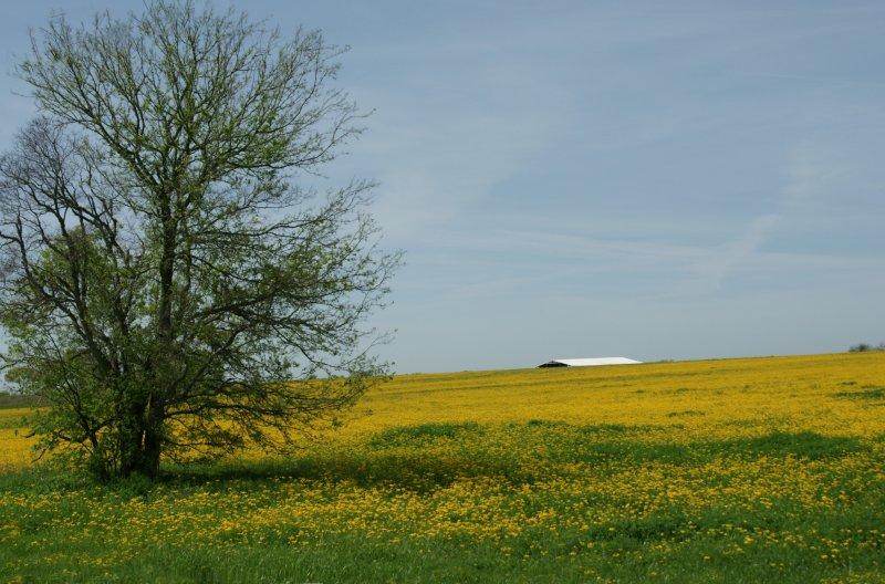 Yellow Pastures