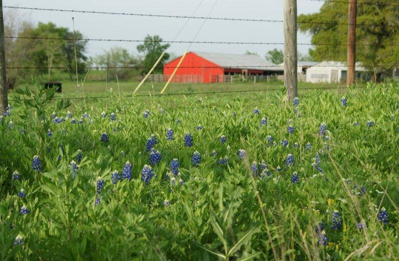 Red White & Blue Texas Landscape