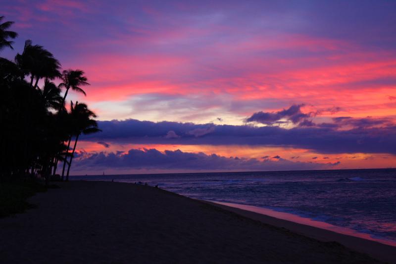 Hawaiian palms in the sunset, Kaanapali, Maui, Hawaii, USA
