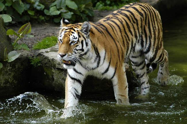 Zoo_16.jpg