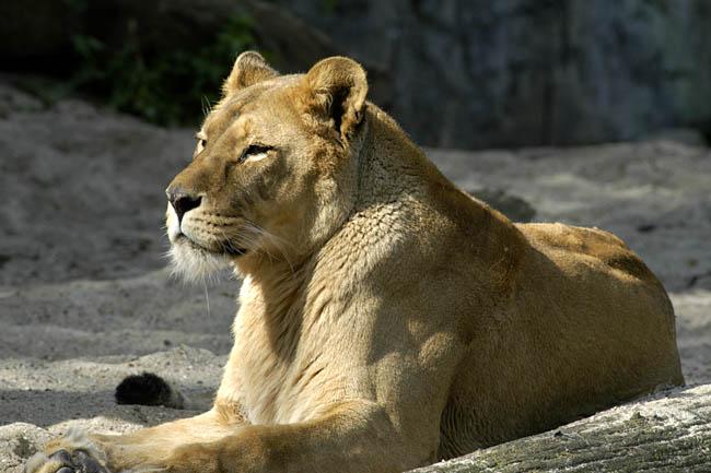 Zoo_19.jpg