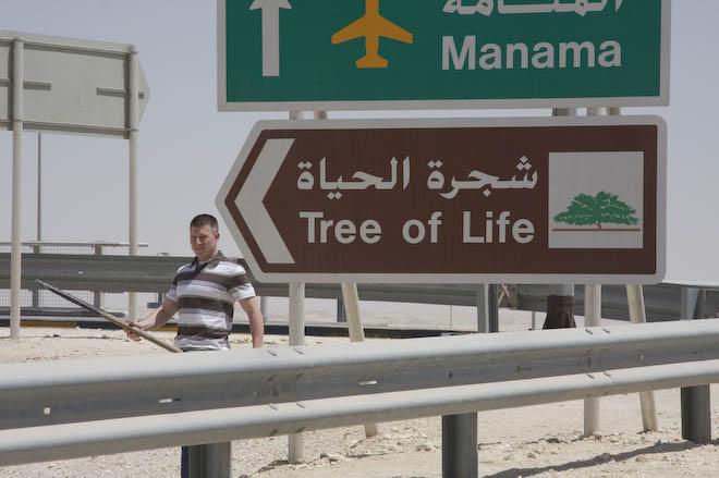 Brims Tree of Life