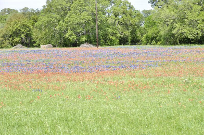 wildflowers DSC1660.jpg