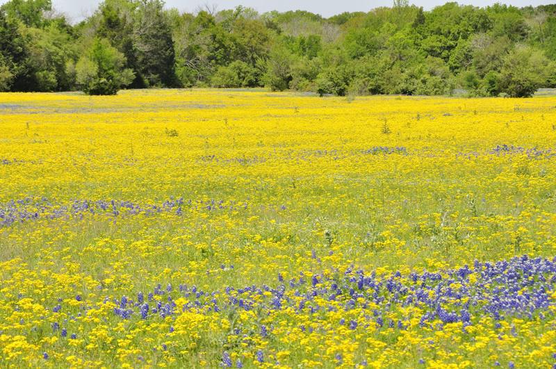 wildflowers DSC1665.jpg