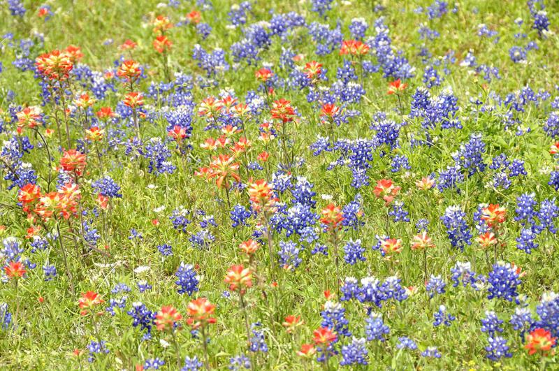 wildflowers DSC1675.jpg
