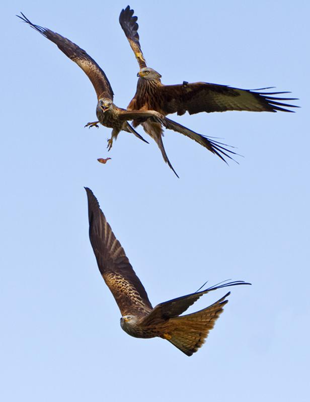 Duelling Kites