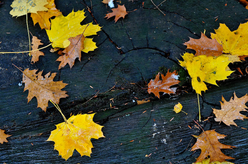 Leaves and Stump