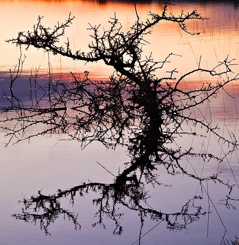 Burren Bush
