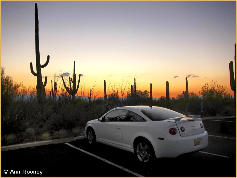 USA - Arizona - Saguaro National Park West