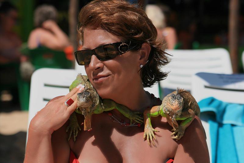 Iguana Wrap