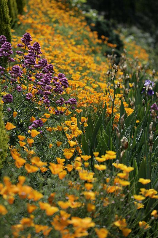 1Beautifully tended gardens.jpg
