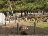 lots of deer in the park