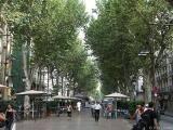 Tree-Lined Rambla