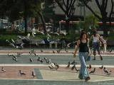 Shoo, Pigeons!