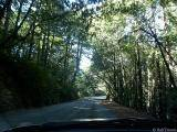 driving through the woods
