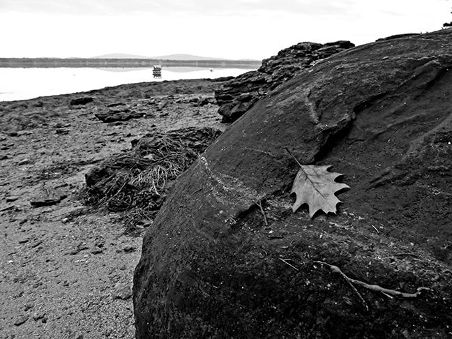 Beach Leaf #1
