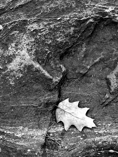 Beach Leaf #2