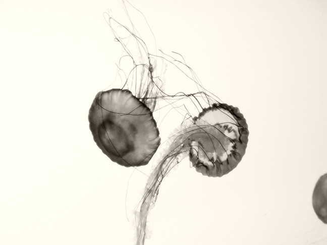 Jellyfish #3