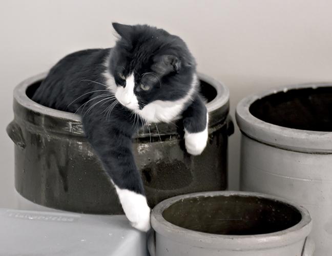 Kitten in a Crock #1