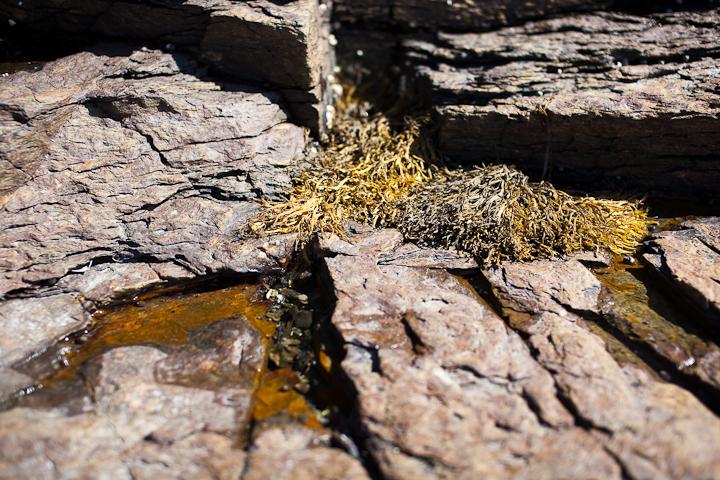 Seaweed and Tidal Pool