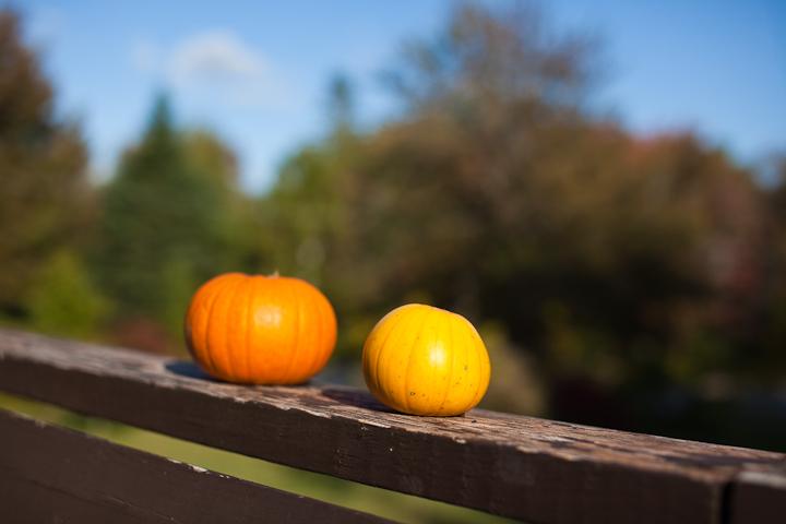 Baby Bear Pumpkin Pair on the Railing