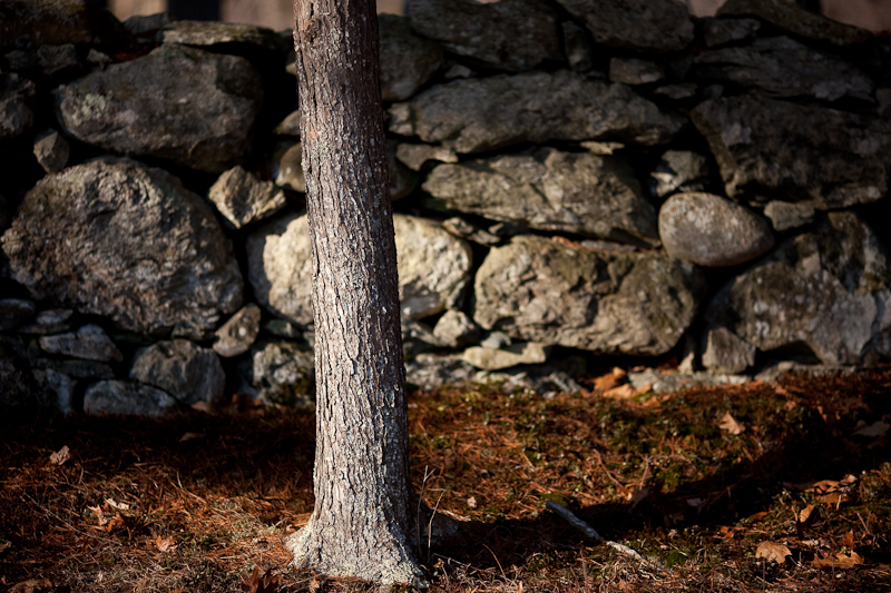 Tree and Stone Wall, Evening
