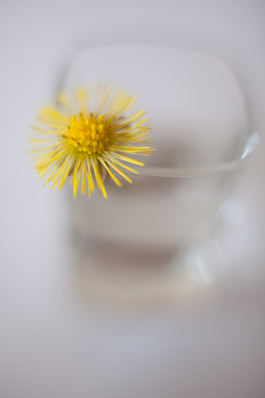 Study of a Little Yellow Flower #1