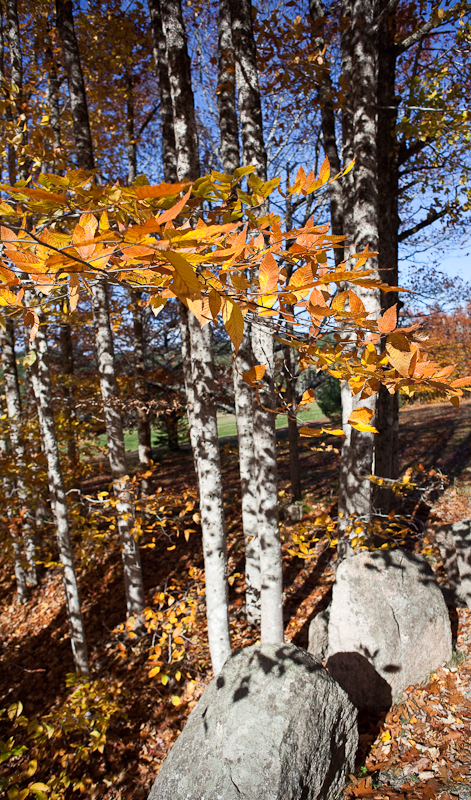 Trees and Carriage Roadside Rocks